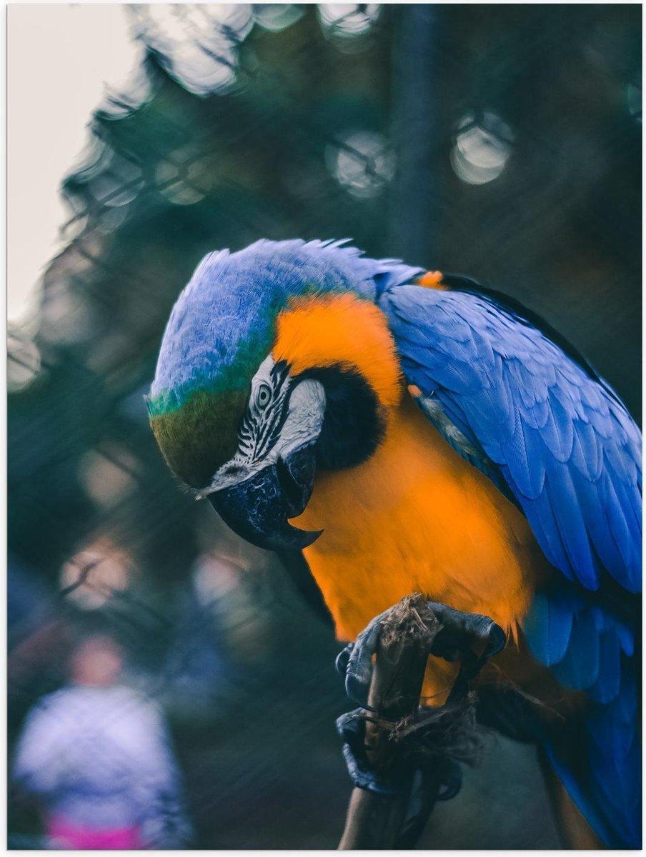 Poster – Mooie Blauw met Gele Papagaai op Stokje  - 30x40cm Foto op Posterpapier