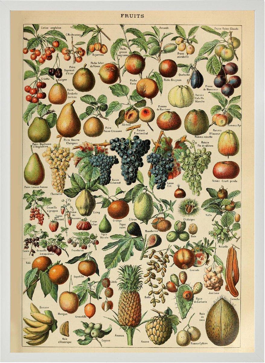 Poster In Witte Lijst - Vintage Fruit - Groenten en Planten Schoolplaat - Millot - Large 70x50