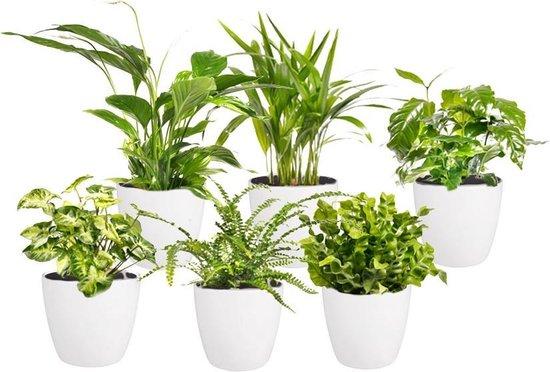 Ecoworld Makkelijke & Luchtzuiverende Kamerplanten Mix - 6 stuks - Ø 12 cm - Hoogte 30-40 cm + Elho Potten Wit