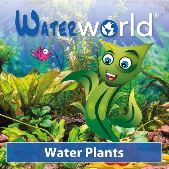 Waterworld Aquariumplanten Mix - Levend - 3 stuks - ↕15-20 cm - GreenGifts.nl