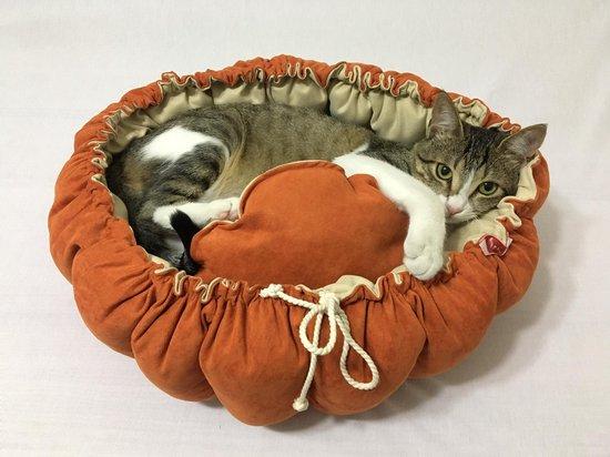 KORA Hondenmand - Kitten Bed - Kat Bed - Kattenbed -niet allergisch- honden mand - kleine hondjes - 60 cm - fluffy - kattenmand - mand voor katten - super zacht - hondenkussen - mand - hond - kat - antislip - maat S - honden bed - kussen