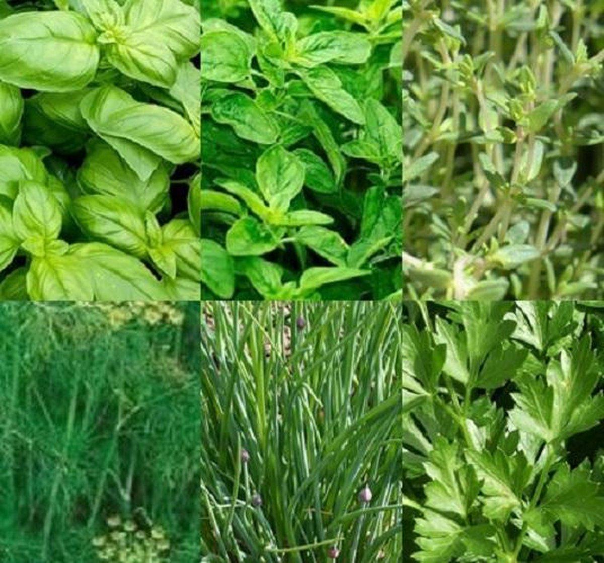 Kruiden zaden assortiment zaadlint (basilicum zaden, oregano zaden, tijm zaden, dille zaden, biesloo
