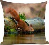 Kussenhoes eekhoorn bij de waterkant, fotograaf Heidie Mulder