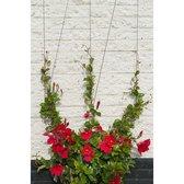 Nature Spandraadsysteem voor klimplanten