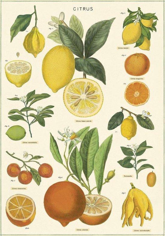 Poster Citrus - Cavallini & Co - Vintage Schoolplaat