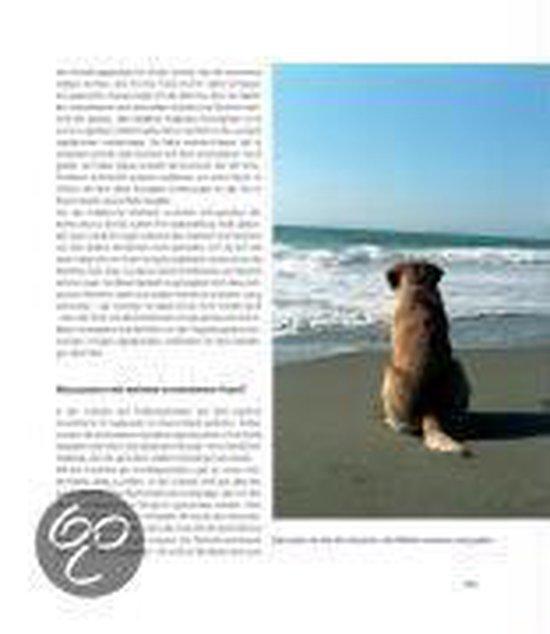 Omslag van Labrador Retriever