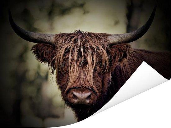 Donkere afbeelding van een Schotse hooglander Poster 40x30 cm - klein - Foto print op Poster (wanddecoratie woonkamer / slaapkamer) / Wilde dieren Poster