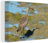 Regenwulp in de zon lopend door de modder Canvas 80x60 cm - Foto print op Canvas schilderij (Wanddecoratie woonkamer / slaapkamer)