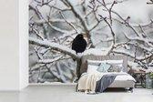 Fotobehang vinyl - Mannelijke merel op besneeuwde boom breedte 330 cm x hoogte 220 cm - Foto print op behang (in 7 formaten beschikbaar)