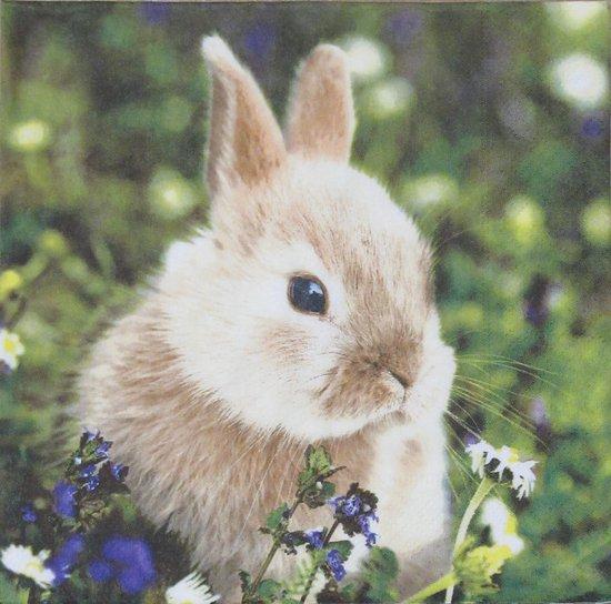Servetten Bunny in Field 33 x 33 cm