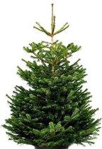 Nordmann Excellent Kerstboom - 200-225 cm - inclusief easyfix boorgat