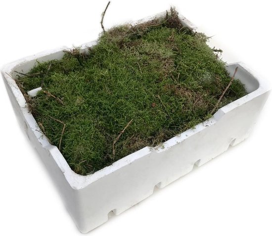 4 lagen vers mos (Platmos) - Ook leuk voor decoratie - in witte kist (40x30cm)