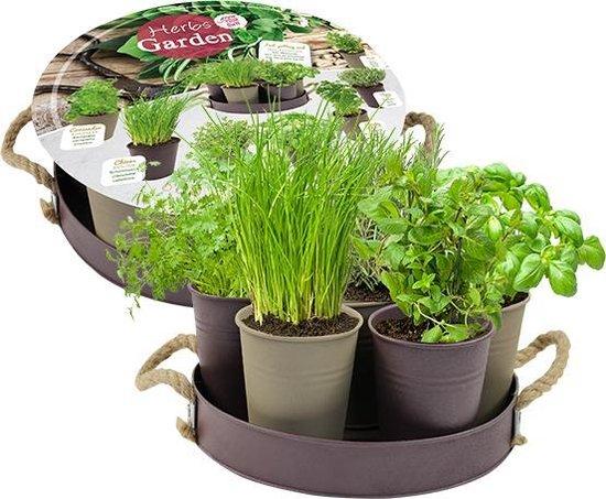 Herb Garden - 7 potjes in taupe variant   incl. 7 soorten kruiden zaad   Eten uit eigen tuin   kruiden planten   Cadeau verpakking   Geschenk   DIY   Grow your own