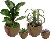 Set van 4 planten met bijpassende groene plantenpotten – kamerplanten voor binnen met verschillende groottes - Mapot