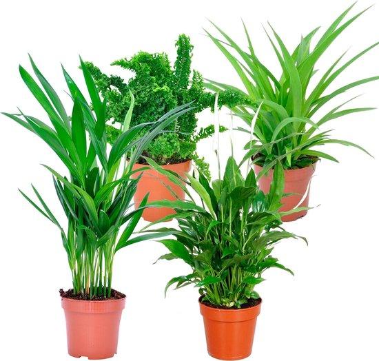 Mix van 4 luchtzuiverende kamerplanten | Areca - Emina - Spathiphyllum - Chlorophytum | ↑ 25-30cm - Ø 12cm