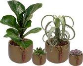 Set van 4 planten met bijpassende groene plantenpotten – kamerplanten voor binnen met verschillende groottes - Kodi