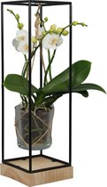 Orchidee | Original Orchids Wit in frame | Living Collection