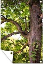 Kastanjeboom in het voorjaar Tuinposter 80x120 cm - Tuindoek / Buitencanvas / Schilderijen voor buiten (tuin decoratie)