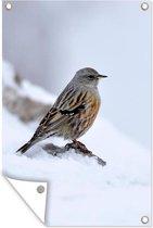 Een Alpenheggenmus in de sneeuw Tuinposter 120x180 cm - Tuindoek / Buitencanvas / Schilderijen voor buiten (tuin decoratie) XXL / Groot formaat!