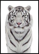 Poster met witte tijger - A3 Poster 29x42cm