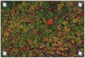 Tuinposter –Gekleurde Bomen van Bovenaf– 120x80 Foto op Tuinposter (wanddecoratie voor buiten en binnen)