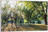 Plexiglas –Bomen– 120x80 (Wanddecoratie op Plexiglas)