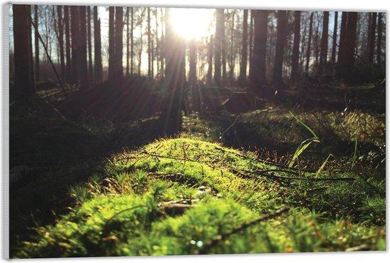 Plexiglas –Bomen met de Zon– 60x40 (Wanddecoratie op Plexiglas)
