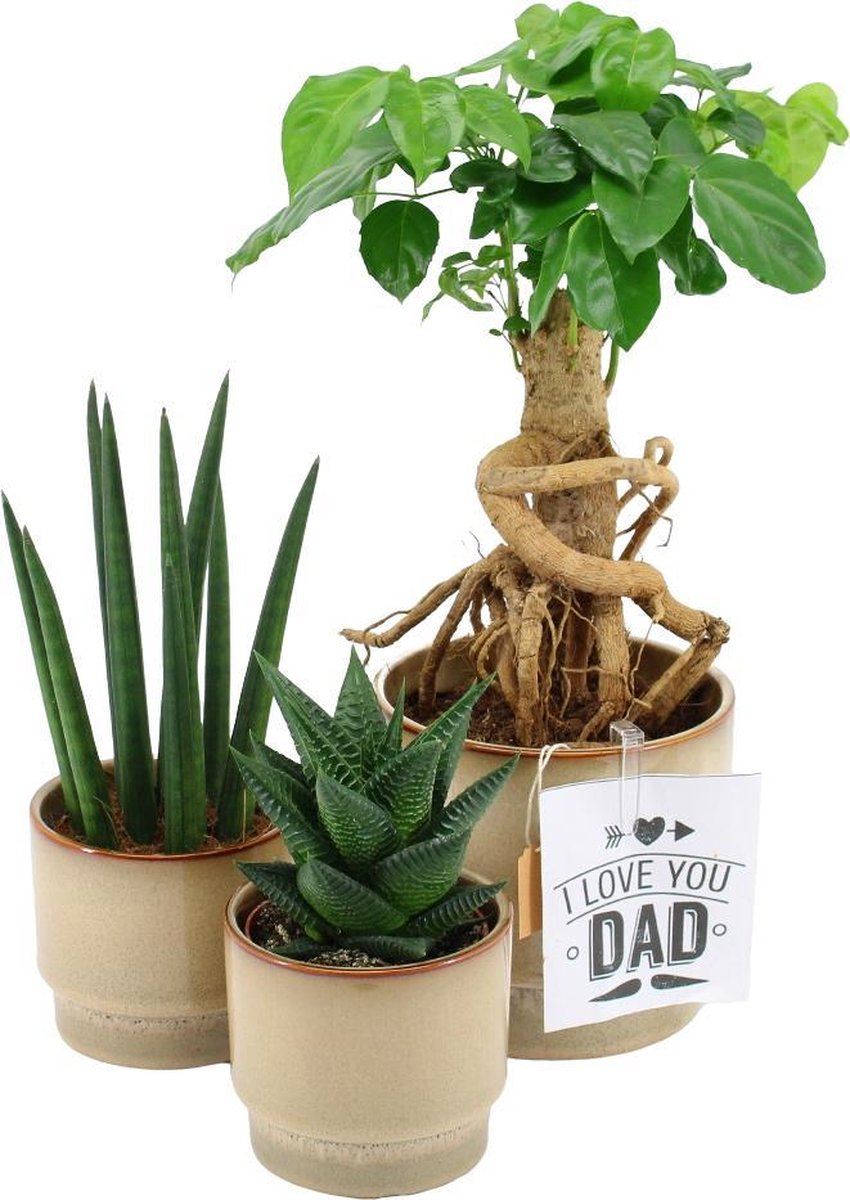 Vaderdag Geschenkset - Stoere Papa Planten - (Tip!: ideaal Vaderdag Cadeau of Cadeau Voor Papa)