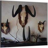 Dibond –Dierenschedels aan de Wand– 100x100 Foto op Aluminium (Wanddecoratie van metaal)
