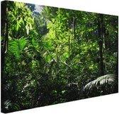 Regenwoud Brazilie  Canvas 120x80 cm - Foto print op Canvas schilderij (Wanddecoratie woonkamer / slaapkamer)