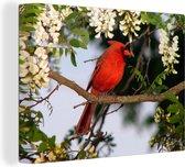 Rode kardinaal tussen de witte bloemen Canvas 40x30 cm - klein - Foto print op Canvas schilderij (Wanddecoratie woonkamer / slaapkamer)