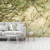 Fotobehang vinyl - Tjiftjaf opgaande in de natuur breedte 320 cm x hoogte 240 cm - Foto print op behang (in 7 formaten beschikbaar)