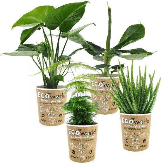 Ecoworld Makkelijke en Luchtzuiverende Kamerplanten Mix - 6 stuks - Ø 12 cm ↕ 30-40 cm