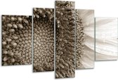 Glas schilderij Bloem | Sepia | 170x100cm 5Luik | Foto print op Glas |  F006635