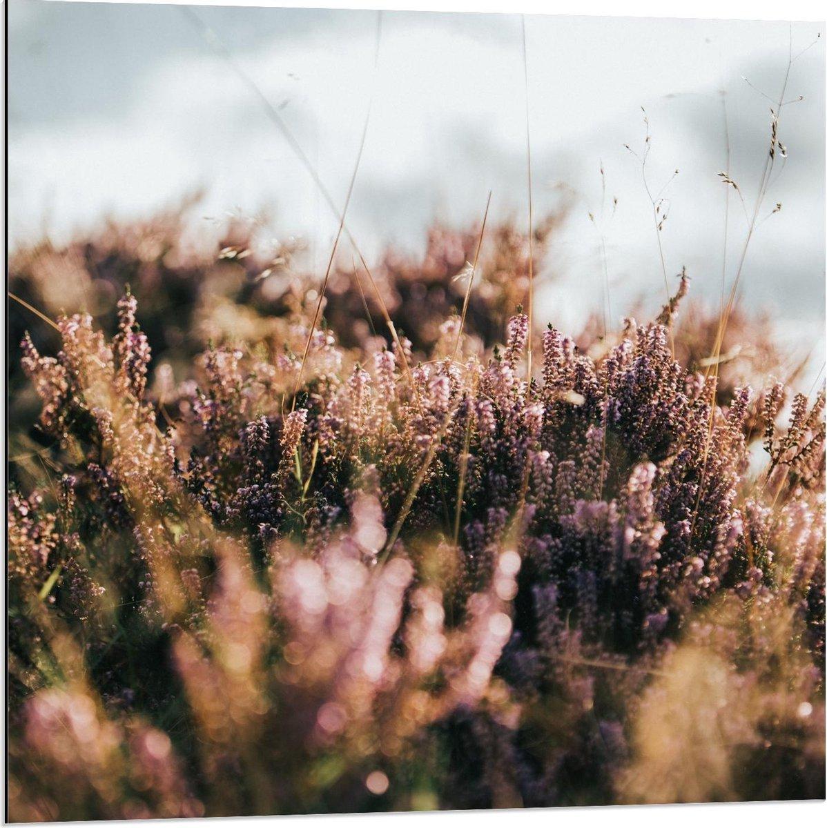 Dibond - Grassen in de Duinen - 80x80cm Foto op Aluminium (Wanddecoratie van metaal)
