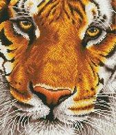 Diamond Dotz® Tiger Bengal Magic - Diamond Painting (44x50 cm)