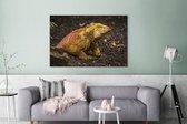 Kleurrijke Landleguaan in het bos in Ecuador Canvas 180x120 cm - Foto print op Canvas schilderij (Wanddecoratie woonkamer / slaapkamer) XXL / Groot formaat!