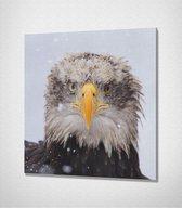 Eagle Canvas