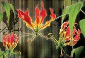 Fotobehang Flowers Floral   XXXL - 416cm x 254cm   130g/m2 Vlies