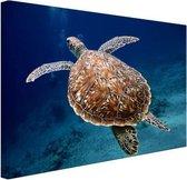 Zeeschildpad  Canvas 60x40 cm - Foto print op Canvas schilderij (Wanddecoratie woonkamer / slaapkamer) / Dieren Canvas Schilderijen