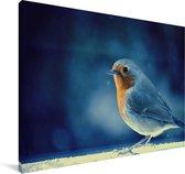 Roodborst op een blauwe achtergrond Canvas 60x40 cm - Foto print op Canvas schilderij (Wanddecoratie woonkamer / slaapkamer)