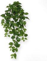 Maxifleur - Scindapsus hangplant 75 cm groen