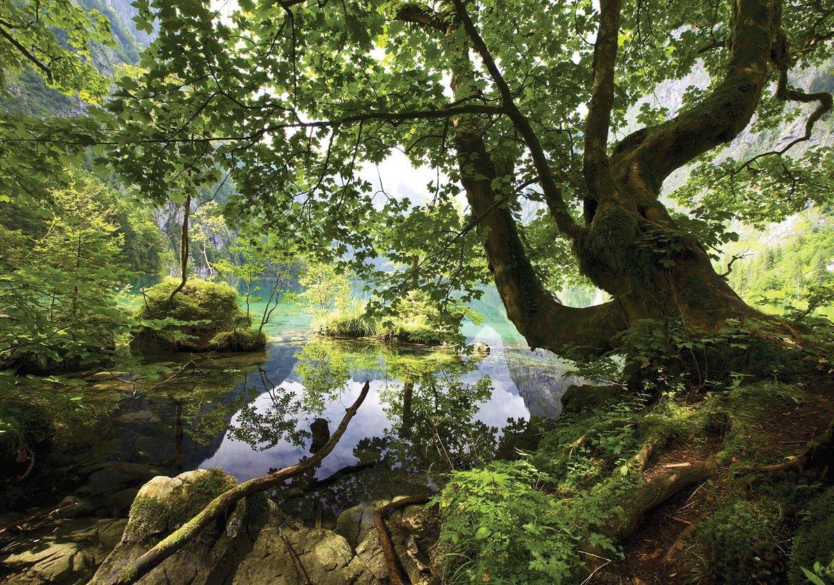 Fotobehang Vlies   Boom, Natuur   Groen   368x254cm (bxh)