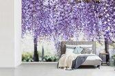 Fotobehang Blauweregen - Paarse blauweregen met een vervaagde achtergrond breedte 360 cm x hoogte 240 cm - Foto print op vinyl behang (in 7 formaten beschikbaar) - slaapkamer/woonkamer/kantoor