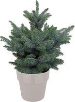 Hellogreen Kleine Mini Kerstboom - Blauwspar - 50 cm - Elho B.For grijs