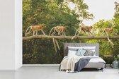 Fotobehang vinyl - Apen wandelend over tak breedte 420 cm x hoogte 280 cm - Foto print op behang (in 7 formaten beschikbaar)
