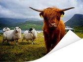 Een Schotse hooglander met zijn lange rode haar en hoorns Poster 40x30 cm - klein - Foto print op Poster (wanddecoratie woonkamer / slaapkamer) / Wilde dieren Poster