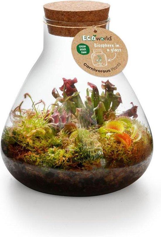 Ecoworld Swamp Biosphere Ecosysteem in Glas - Piramide Glas - Ø 23 cm ↕ 26 cm
