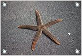 Tuinposter –Zeester op Zand -120x80  Foto op Tuinposter  (wanddecoratie voor buiten en binnen)