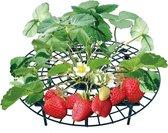 Aardbeien Rekje - Aardbeien Kweken - Aardbei Rek - Aardbeien Schoon Houden - Aardbeien Rek - Schone Aardbeien